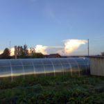 Облако гриб