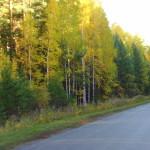Путь до поместья