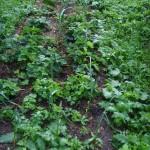 Урожай 11