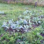 Урожай 12