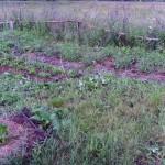 Урожай 15