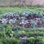 Урожай 16