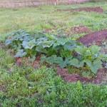 Урожай 18