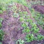 Урожай 19