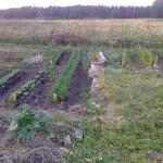 Урожай 2