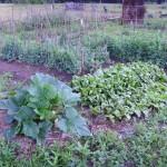 Урожай 29