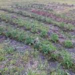 Урожай 3