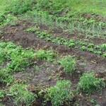 Урожай 7