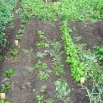 Урожай 9