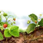Продажа лесных ягод и грибов  в 2015 году