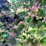Салат обжорка 2