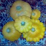 Урожай патиссонов ораньжевый НЛО и жёлтых Солнышко