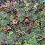 Урожай 2016 созрел 43