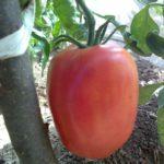 Урожай 2016 созрел 6