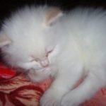 Белый котик 10