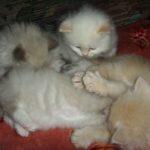 Белый котик 11