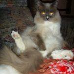 Белый котик 14