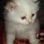 Белый котик 2