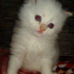 Белый котик 3
