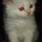 Белый котик 5