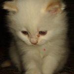 Белый котик 6
