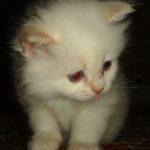 Белый котик 7