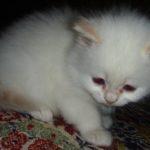 Белый котик 9
