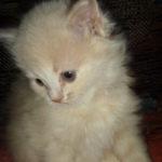 Розовый котик 10