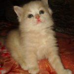 Розовый котик 2