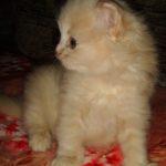 Розовый котик 3