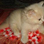 Розовый котик 4