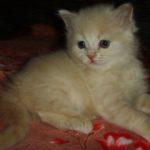 Розовый котик 7