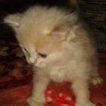 Розовый котик 8