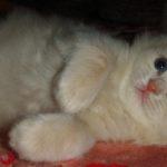 Розовый котик 9