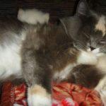 Чудный котик 10