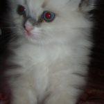 Чудный котик 3