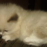 Чудный котик 4