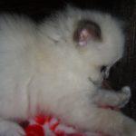 Чудный котик 5