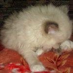 Чудный котик 6