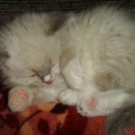 Чудный котик 7