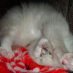 Чудный котик 8