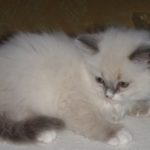 Чудный котик 12