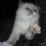 Чудный котик 14