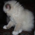 Чудный котик 15