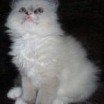 Чудный котик