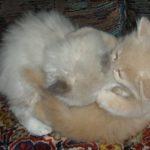 Чудный котик 16