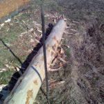 Как ошкурить лес 7