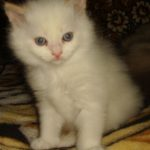 Снежный котик 13