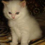 Снежный котик 14