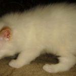 Снежный котик 15